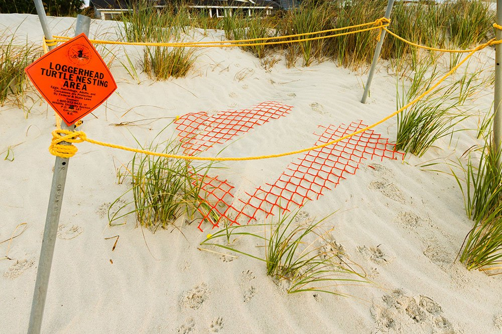 Loggerhead sea turtle nest warning on beach